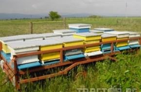 В Плевен се открива традиционното изложение по пчеларство