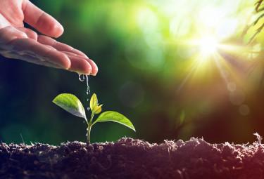 Екосхеми за биоземеделие – за първи път след 2022 г.